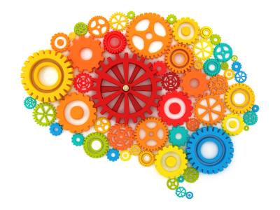 Brain Questions to ask about Curriculum